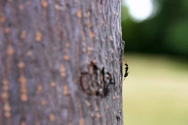 ant climbing tree