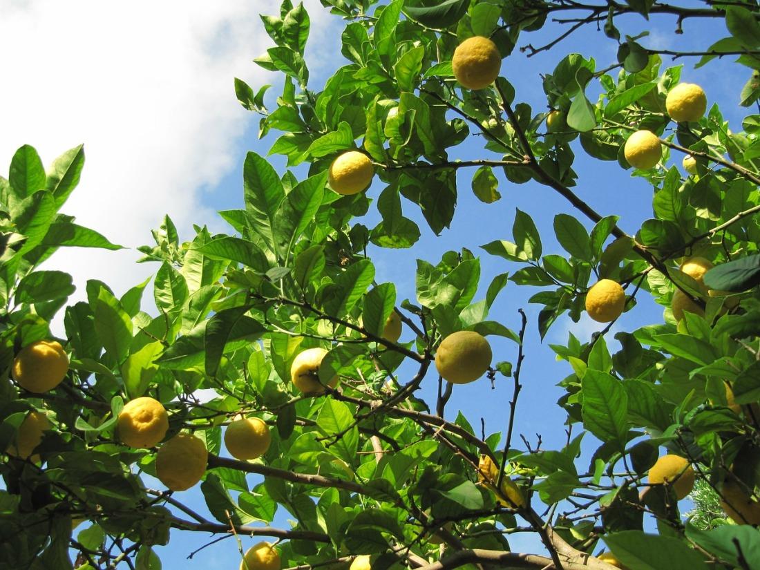 lemons-49063_1280