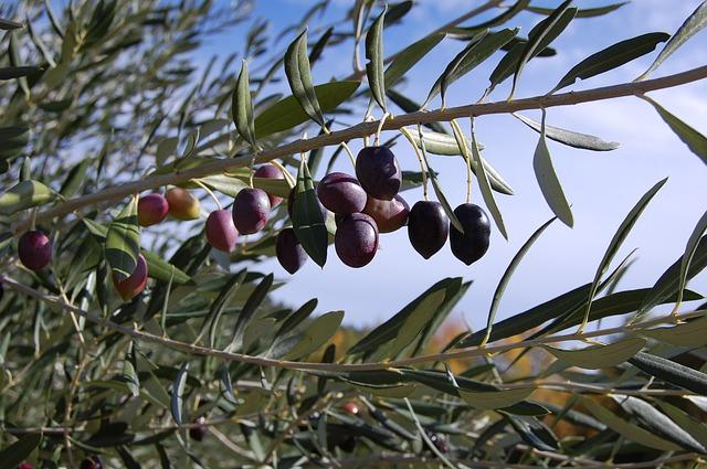 olives-287687_640
